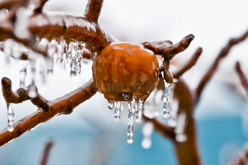 Äpplen, i att frysa regn  royaltyfria bilder