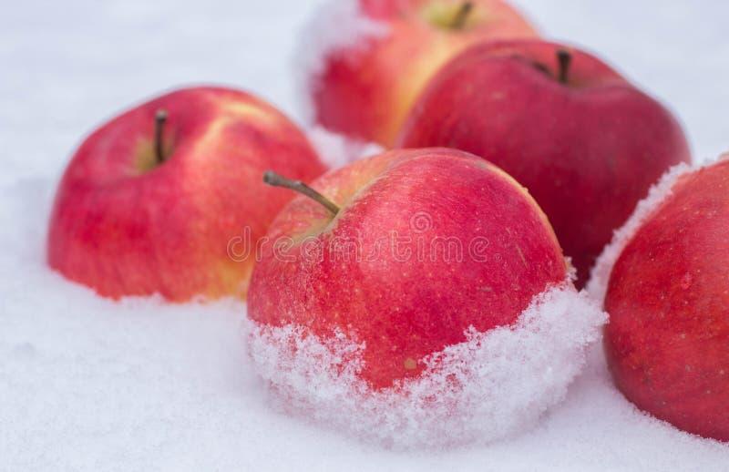 Äpplen i snön fotografering för bildbyråer