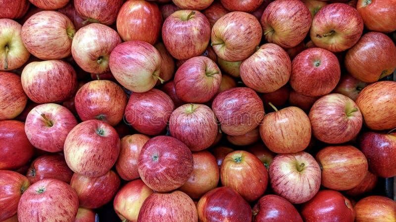 Äpplen i stora partier royaltyfri illustrationer