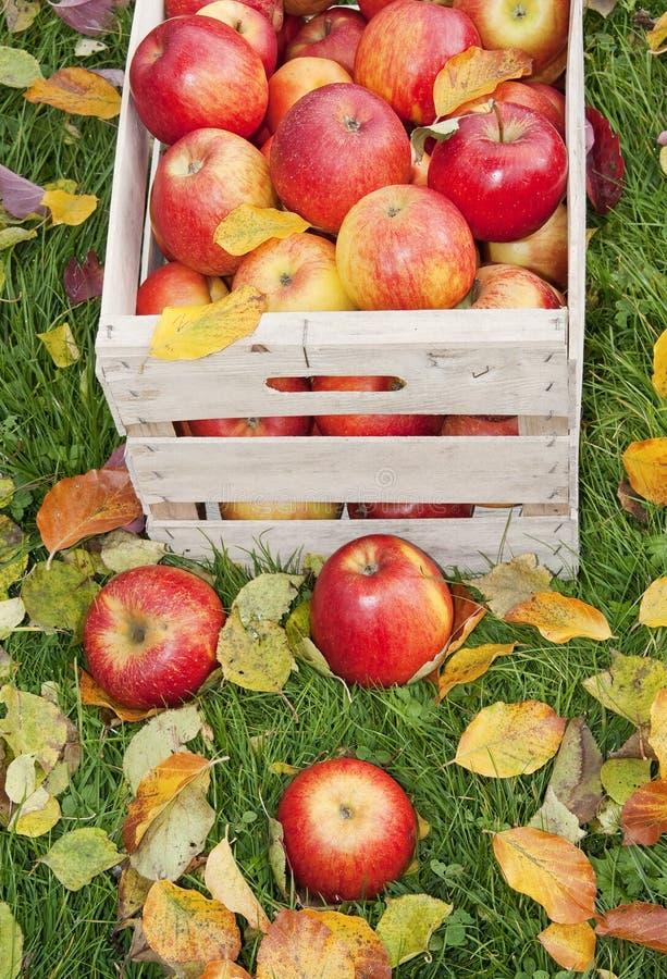 Download Äpplen i trädgården fotografering för bildbyråer. Bild av oktober - 27287813