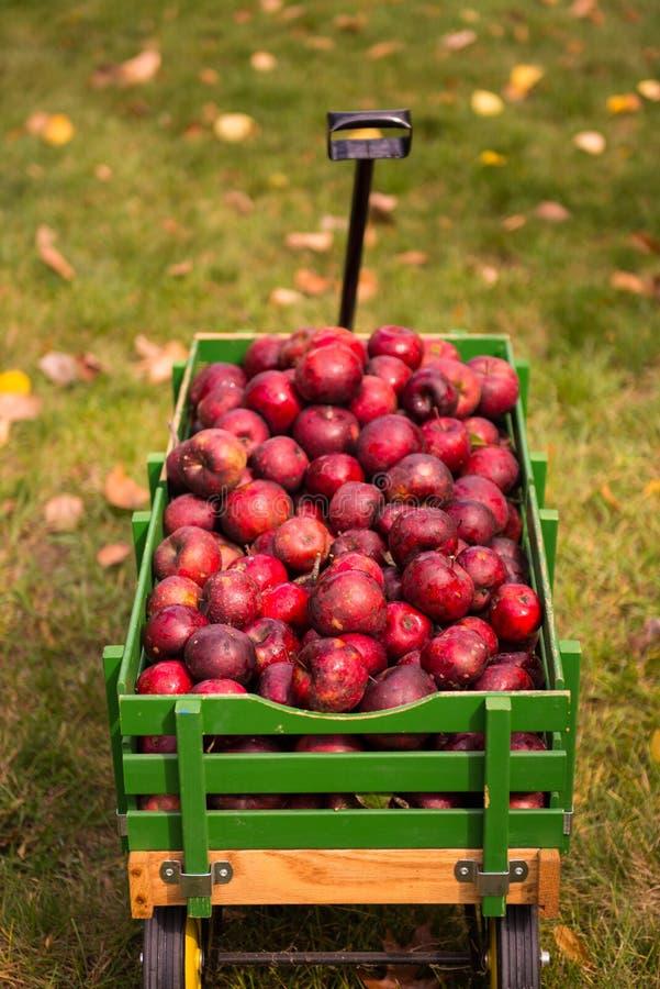Äpplen i vagn royaltyfria foton
