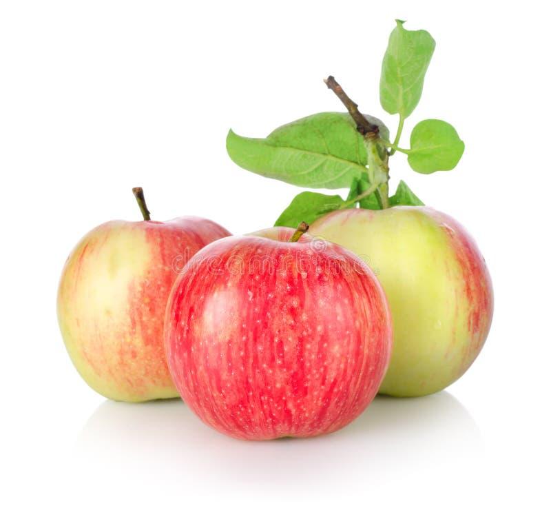 äpplen isolerade mogna tre royaltyfria foton