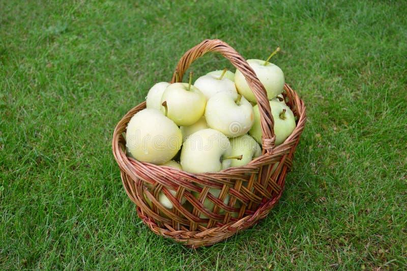 Äpplen korg, sommar, gräs, vitaminer, frukter royaltyfria foton