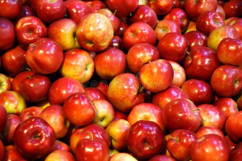 äpplen macintosh royaltyfri foto
