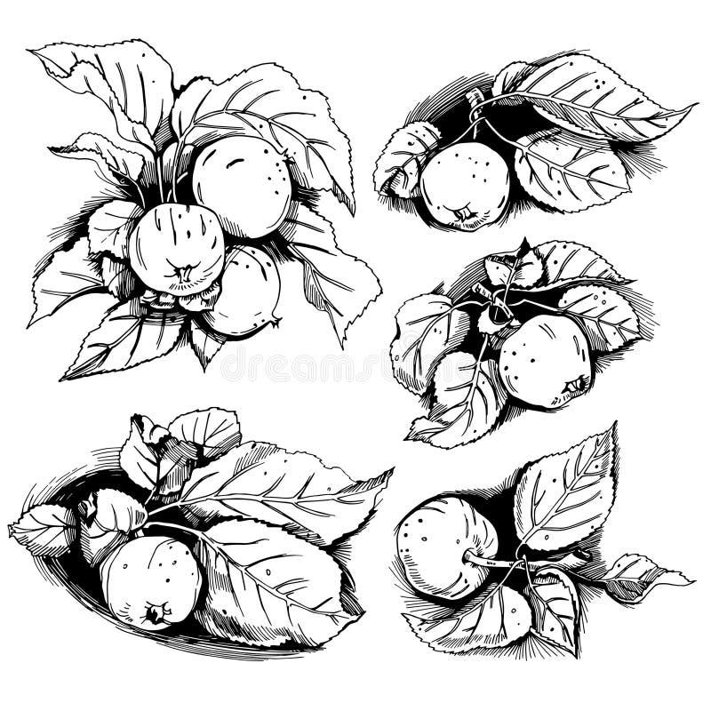 Äpplen med sidauppsättningen vektor illustrationer