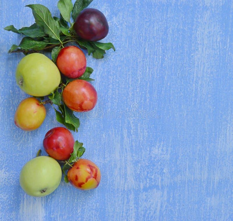 Äpplen och plommoner på en ljus blå bakgrund arkivbild