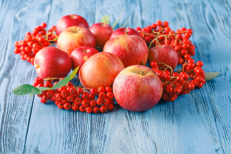 Äpplen och rönnbär höstlivstid fortfarande arkivfoto