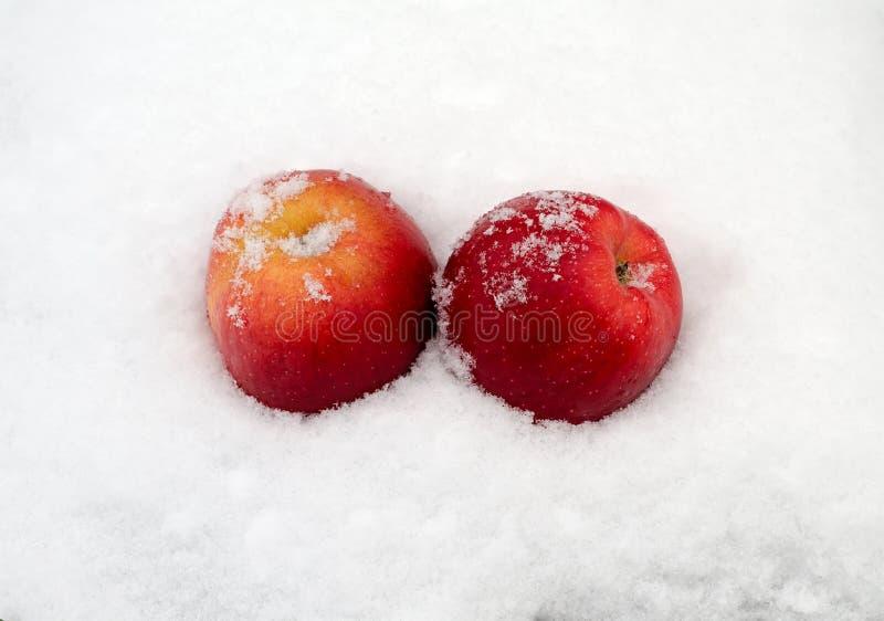 Äpplen på snow royaltyfri fotografi