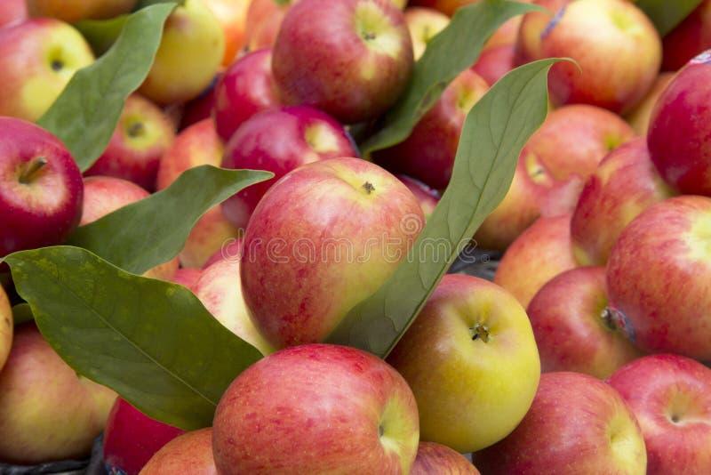 Äpplen på stånd royaltyfri foto