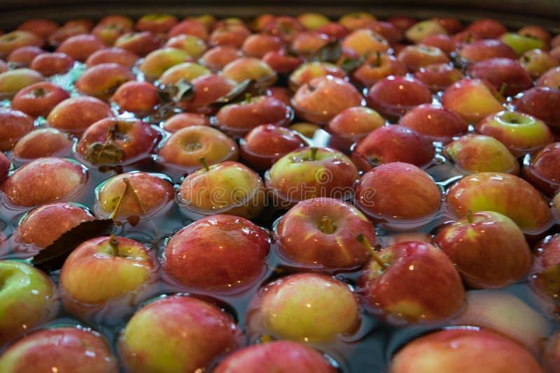 Äpplen som är klara för äppeljuicepress royaltyfria bilder