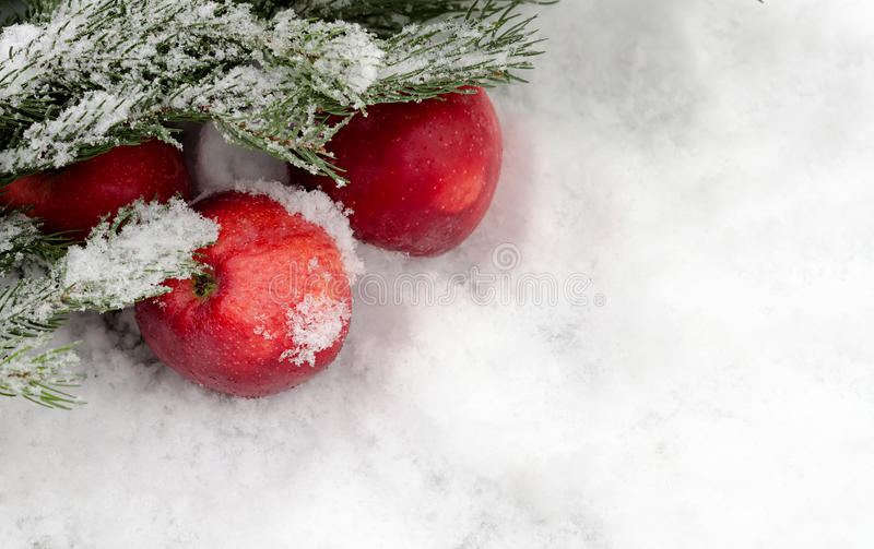 Äpplen under ettträd arkivfoto