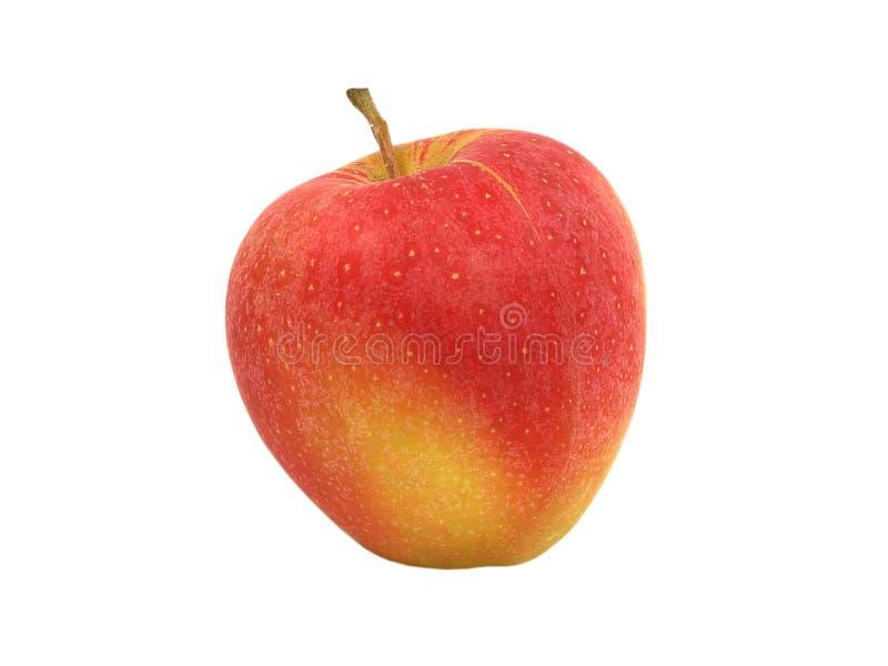 äpplered royaltyfri bild
