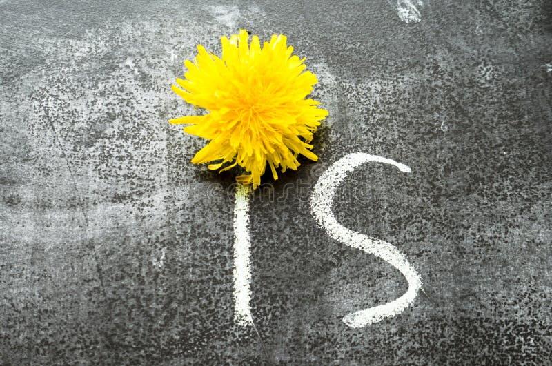 ?r den handskrivna inskriften f?r krita p? en svart svart tavla Ljus gul maskrosdel av inskriften arkivfoton