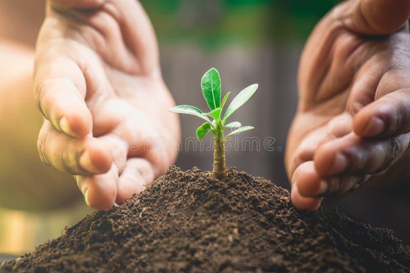 Är händer skydd och det hjälpande trädet som växer en insida för ljus kula Miljöledning för hållbart arkivfoton