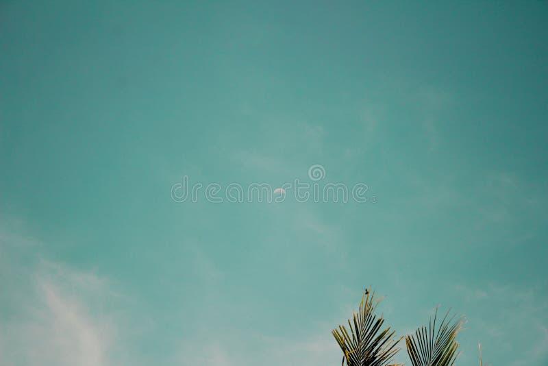 Ästhetische blauer Himmel- und Palmeblätter lizenzfreies stockbild