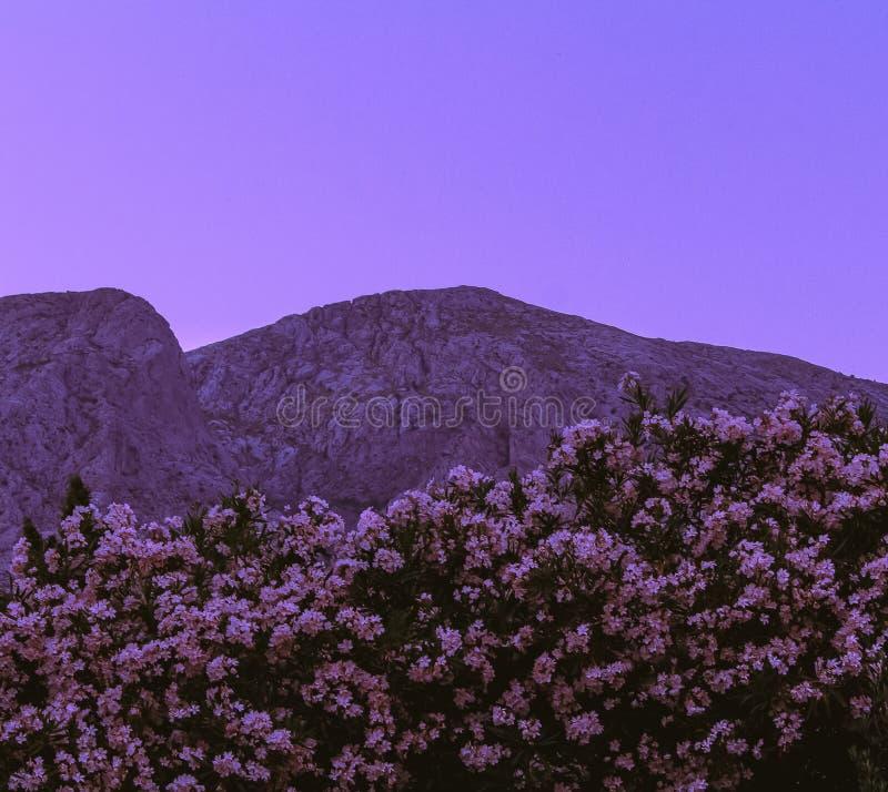 Ästhetisches Foto von mountainswith Blumen stockfotografie