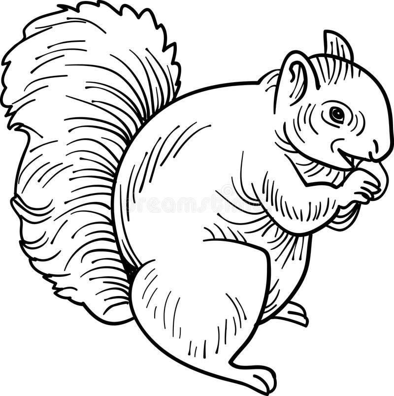 äta ekorren vektor illustrationer