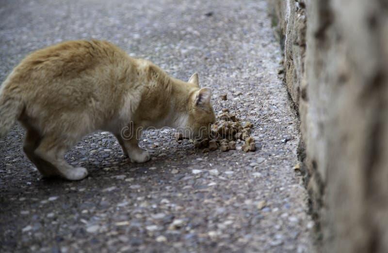 Äta för gatakatter fotografering för bildbyråer