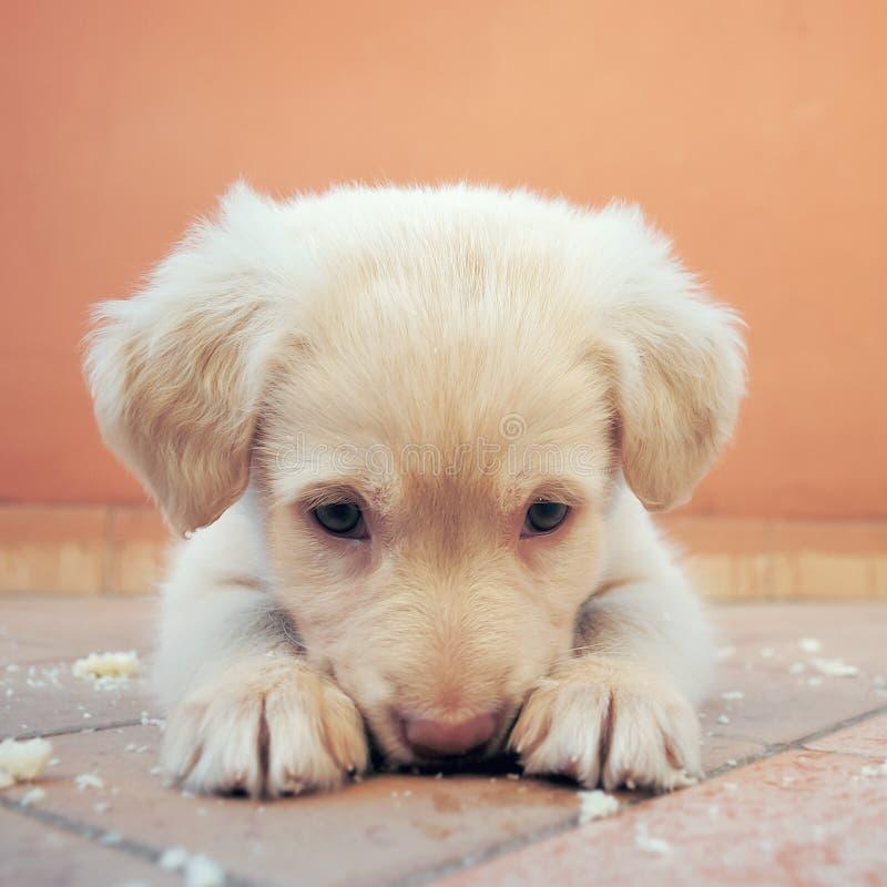 Äta för hund fotografering för bildbyråer
