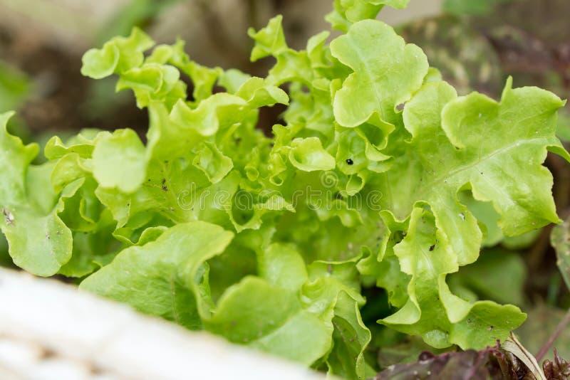 Äta grönsaker, gräsplansidor och små kryp royaltyfria foton