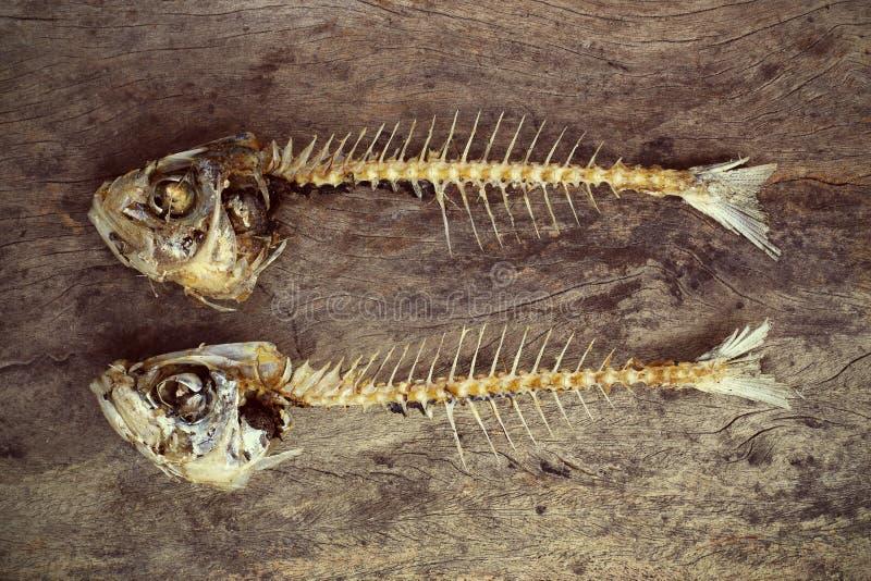 Äten fisk med head och svansen royaltyfria bilder