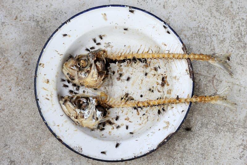 Äten fisk med head och svansen fotografering för bildbyråer
