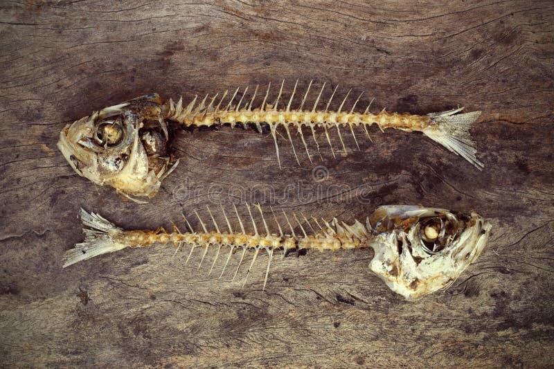Äten fisk med head och svansen royaltyfri fotografi