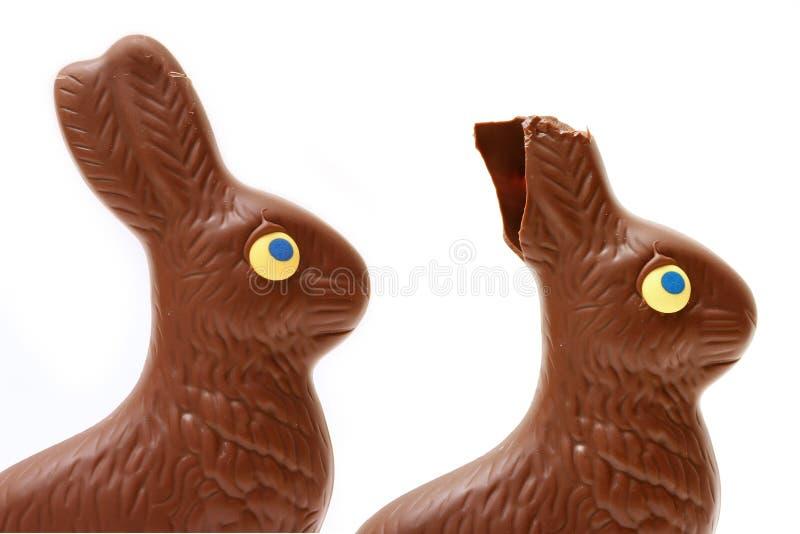 äten Kanin Arkivbild