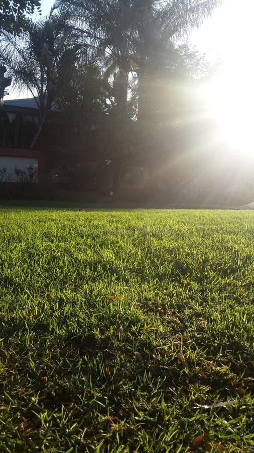 Ätherisches Gras lizenzfreies stockfoto