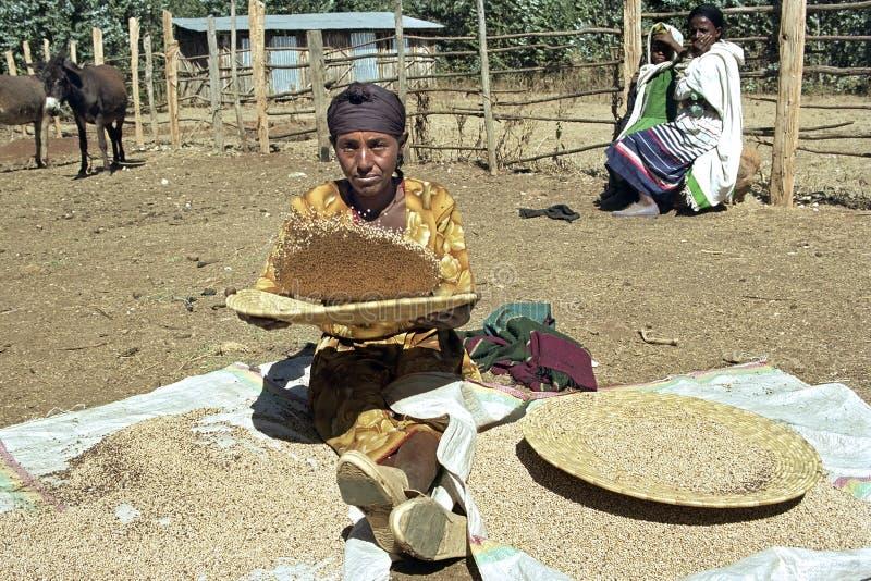 Äthiopische Frau soll Spreu vom Korn trennen lizenzfreies stockfoto