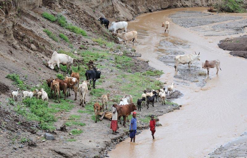 Äthiopische Leute mit Vieh stockbilder