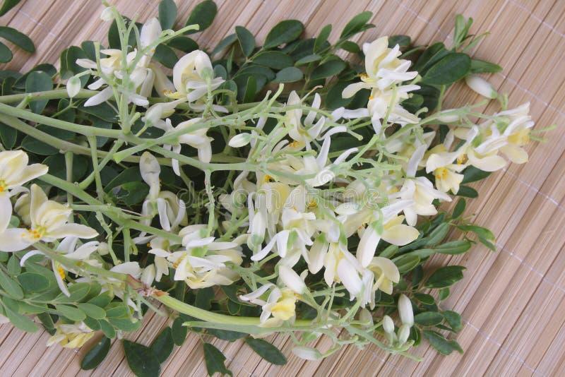 Ätlig moringa blomma royaltyfri foto