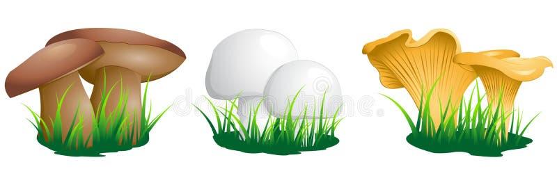 Ätliga champinjoner stock illustrationer