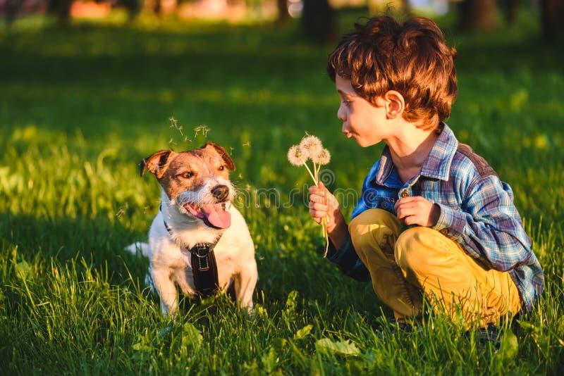 做坏笑话吹的蒲公英的淘气孩子男孩在狗 免版税库存照片