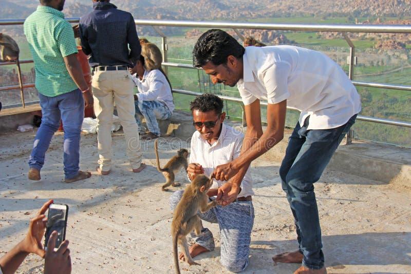 印度,亨比,2018年1月31日 印度人游人在亨比喂养猴子用在Anjaney和哈奴曼寺庙小山的香蕉  免版税库存照片