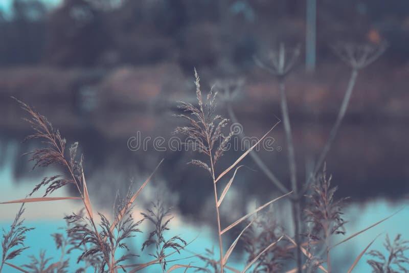 反对一条河的植物早晨 免版税图库摄影