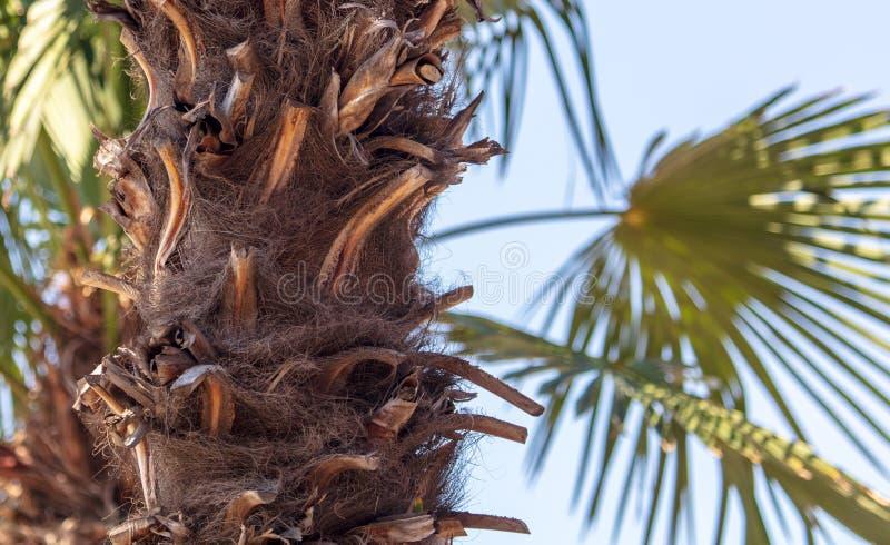 反对天空蔚蓝的棕榈树树干 免版税库存图片