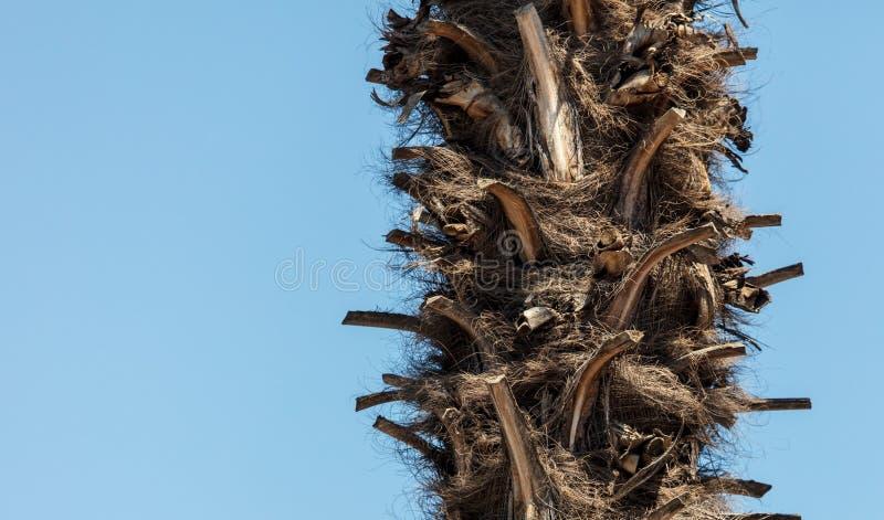 反对天空蔚蓝的棕榈树树干 图库摄影