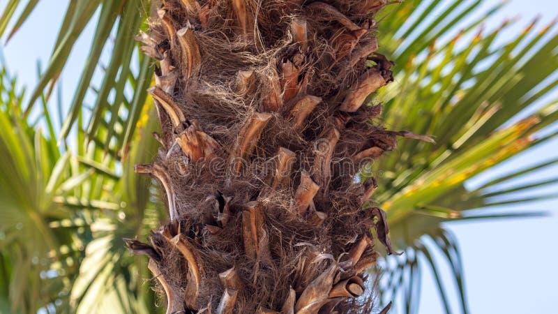 反对天空蔚蓝的棕榈树树干 库存照片