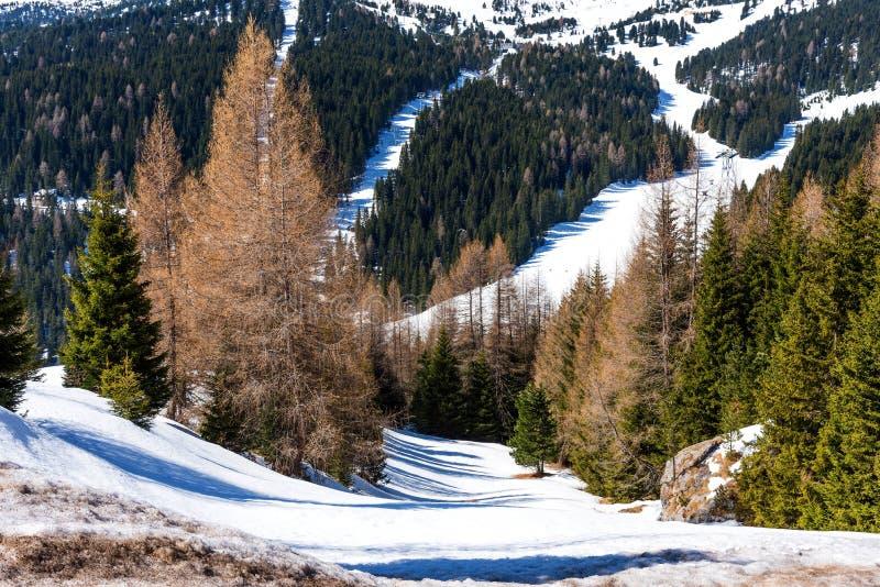 反对天空蔚蓝的白云岩和山的全景与森林的在春天,波尔扎诺自治省,意大利 免版税库存照片