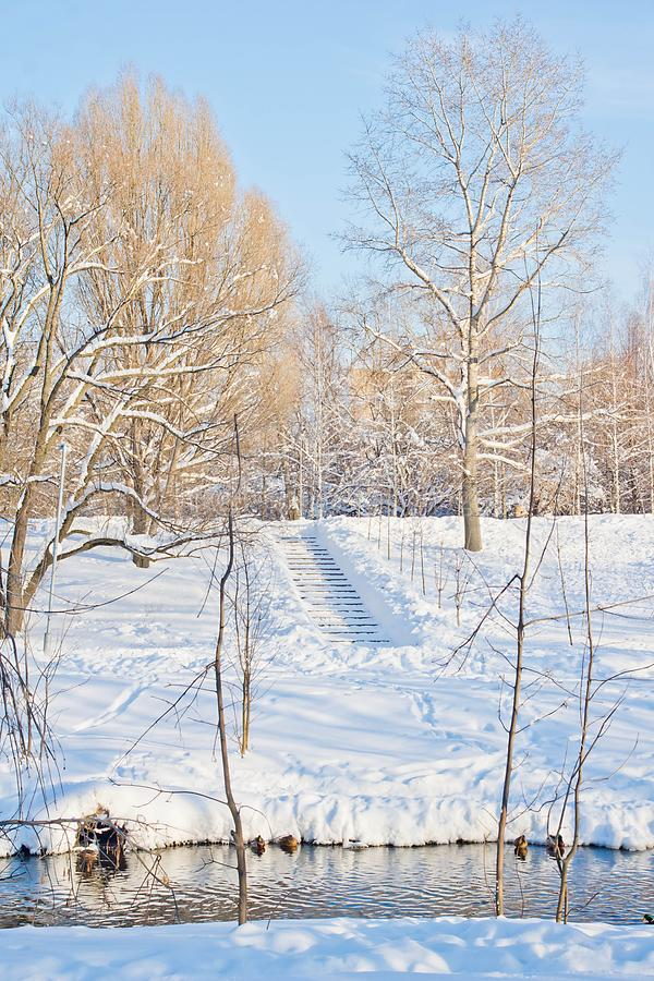 台阶和鸭子在河在冬天公园 免版税库存图片