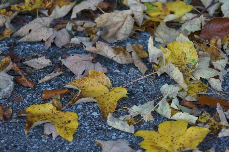 叶子在地板上登陆了 免版税库存照片