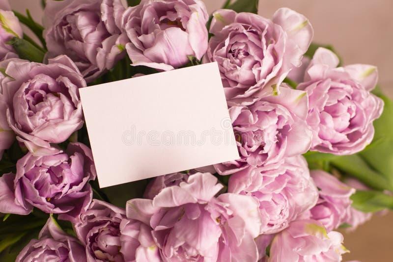 双重紫罗兰色郁金香美丽的大花束与空白的贺卡的 安置文本 国际妇女节关闭u的嘲笑 免版税库存照片