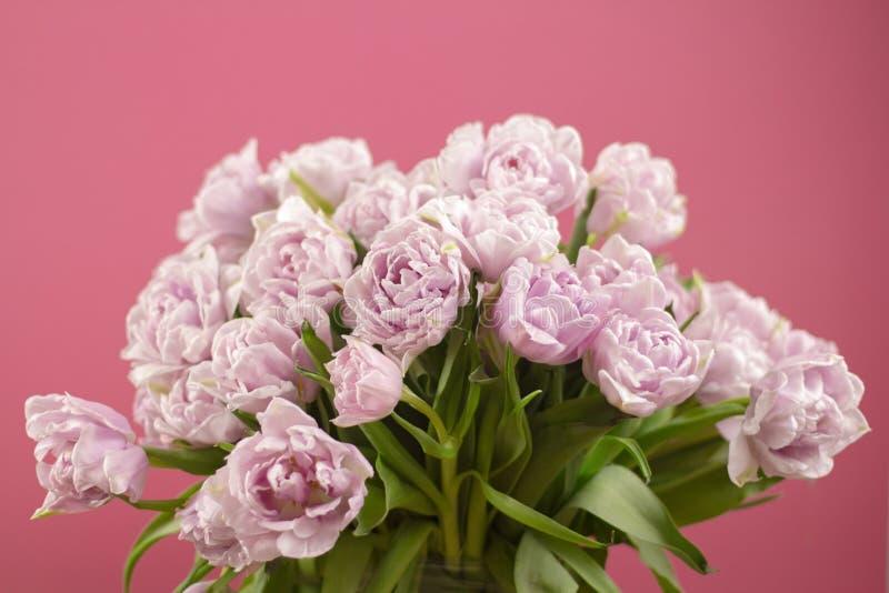 双重紫罗兰色郁金香花美丽的大花束的关闭在黑暗的桃红色背景的 选择聚焦 免版税图库摄影