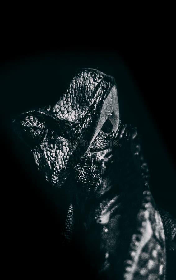 变色蜥蜴的黑白图片 免版税库存图片