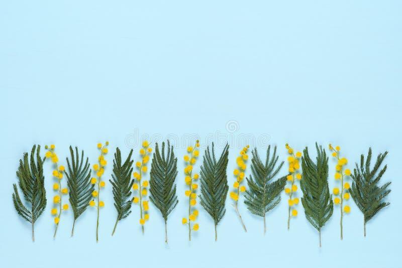 含羞草花和叶子在行的在蓝色 免版税库存图片
