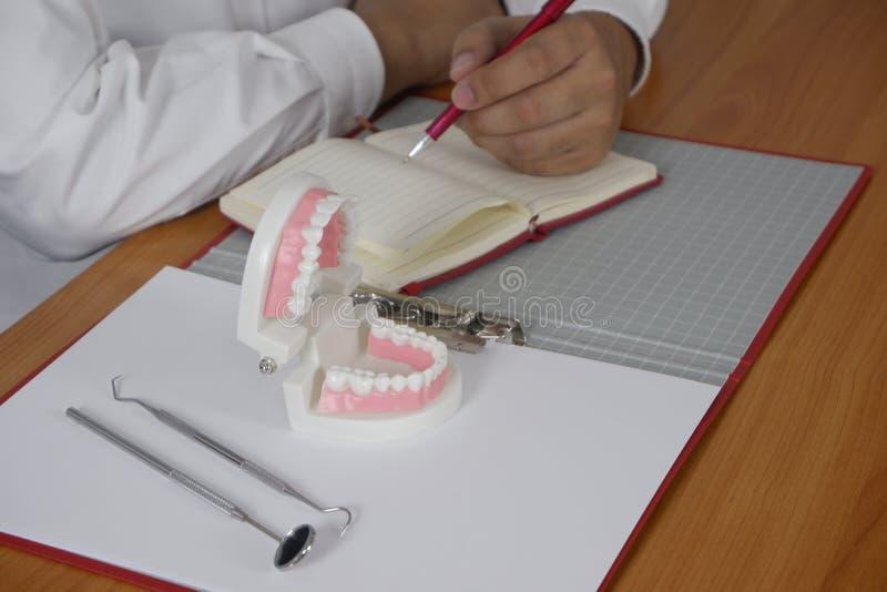 坐在与牙模型的在专业牙齿诊所,牙齿和医疗概念的桌和工具上的牙医 库存图片