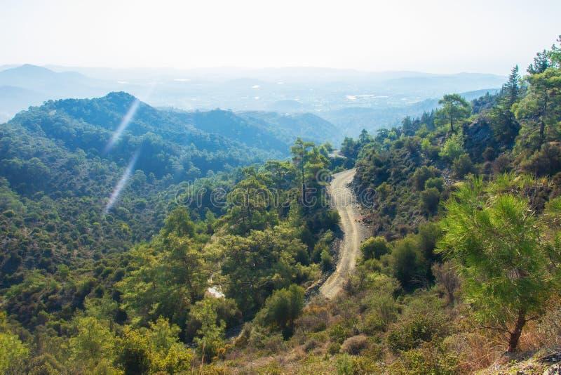 塞浦路斯山的森林 免版税库存图片
