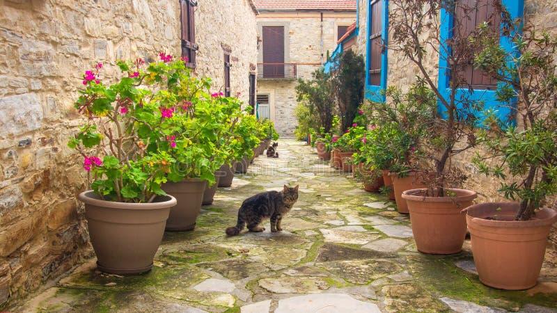 塞浦路斯街道 图库摄影