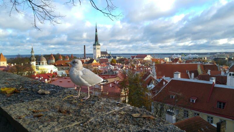塔林,爱沙尼亚看法  免版税库存图片
